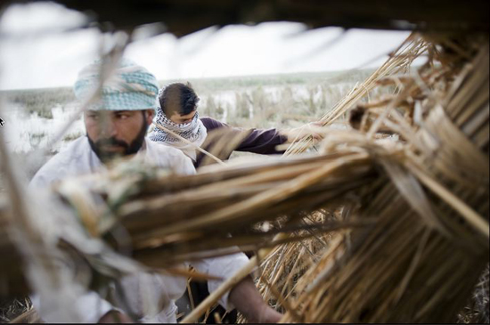 09-Men in Southern Iraq Making Reed Hut